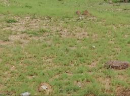 serviced land for sale at Oyibi Opposite Valley View University