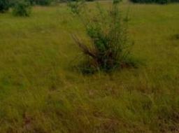 land for sale at Winneba